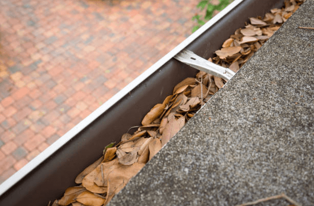 gutter filled with brown leaves